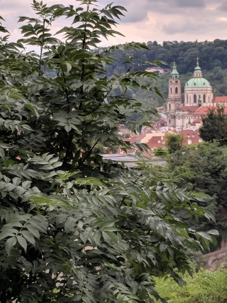 A view of Prague from the park on the hill