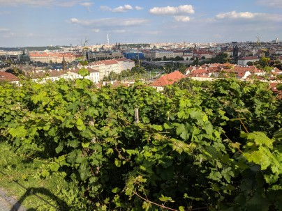 """Overlooking the """"king's vineyard"""" and then off to the city"""
