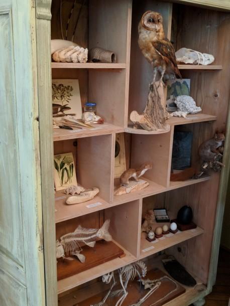 Several specimens in the Zabinski office