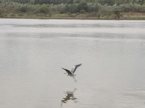 I guess we got to close to this blue heron.